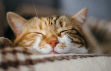 10 science-based reasons to get a cat