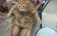 "Stunned with the cat carrying ""8kg"" of fat in the body, but always feeding"