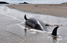 Dolphins suffer from skin disease with climate change