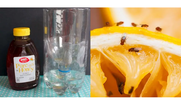 How to Make a Homemade Fly Trap to Get Rid of Any Indoor or Outdoor Pests