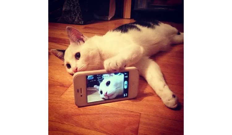 Let's see how the pets know how to take selfies with their phones
