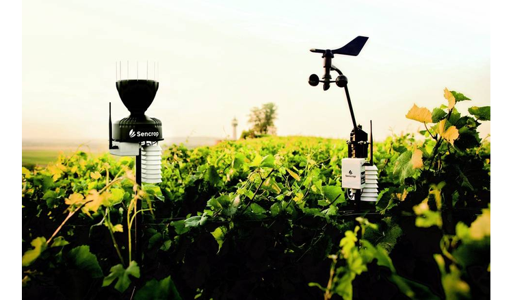 Sencrop's weather sensors are spreading among Bordeaux winegrowers